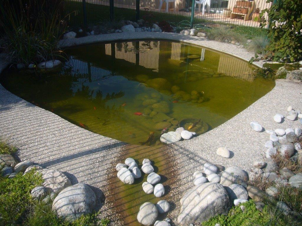 Bassin avec plantes aquatiques md paysage conseils - Amenagement bassin aquatique ...